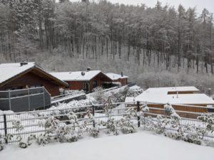 Winter Waldsee Rieden